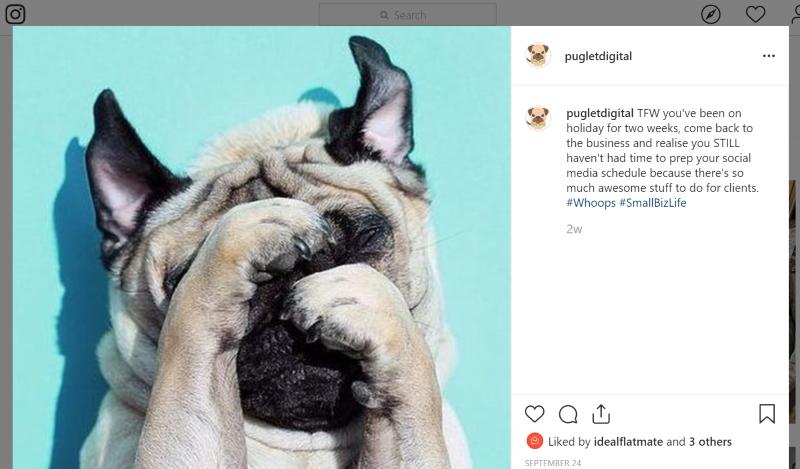 Puglet Social Media Fail